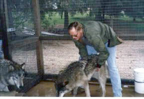 Wolves | Kimbertal Kennels